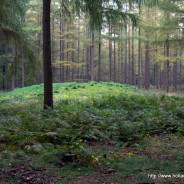 Prehistoric burial mounds near Lage Vuursche